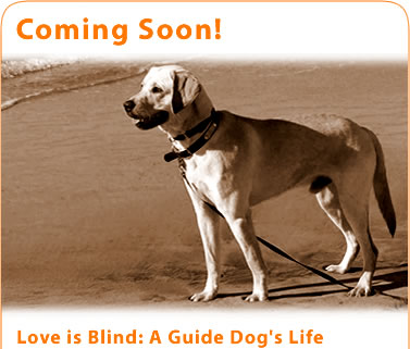 Coming Soon! Love is Blind: A Guide Dog's Life. Here is also an image of Kevin's guide dog on the beach.
